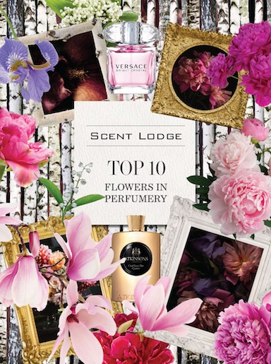 Scent Lodge: Top 10 Flowers in Perfumery